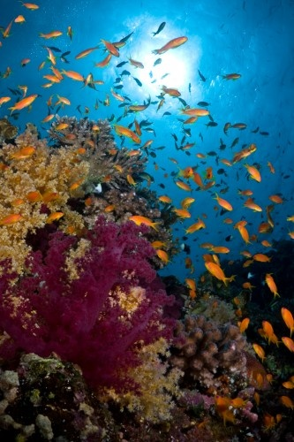 SOON!!! A typical reefscene shot somewhere of the cost south of Marsa Alam, Egypt