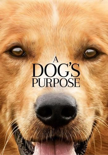 A Dog's Purpose for Rent, & Other New Releases on DVD at Redbox