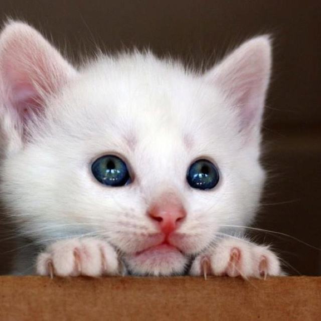 Look of innocence