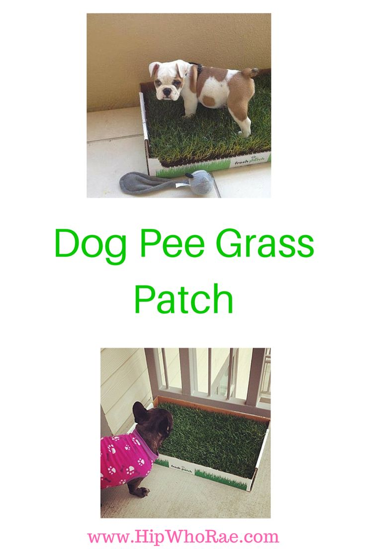 Did you see Shark Tank about the Dog Pee Grass Patch? This is the most…