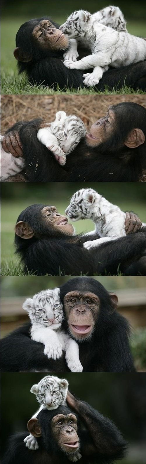 Dadgum it...now I need a monkey AND a tiger!!