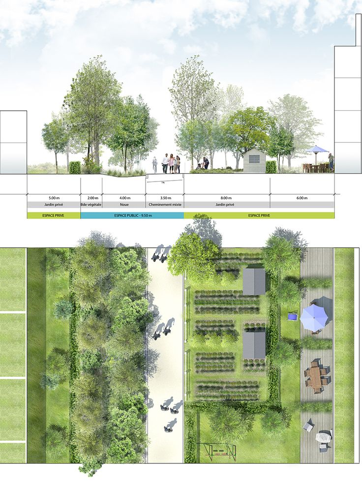 Coupe-plan sur la séquence des jardins partagés