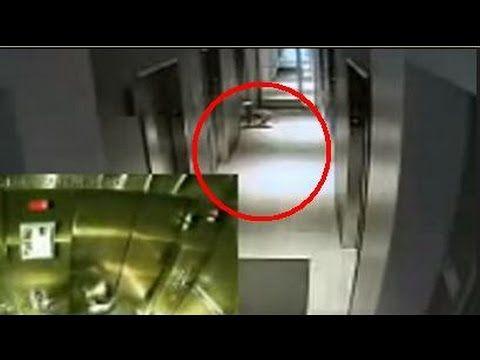 Aneh Tapi nyata, aneh, video aneh manusia lupa dengan anjing saat masuk lift. video ini diambil dari kamera cctv yang berada di hotel tersebut. video aneh