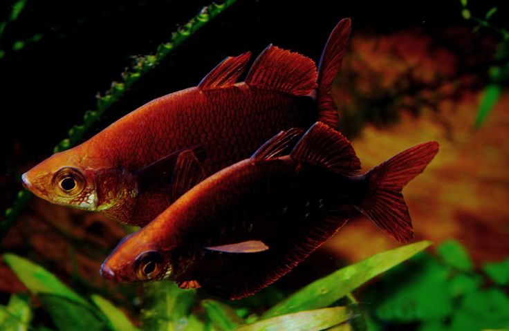 ?ber 1.000 Ideen zu ?Australian Rainbow Fish auf Pinterest ...