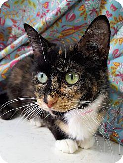Prattville, AL - Domestic Shorthair. Meet Dottie 26623, a cat for adoption. http://www.adoptapet.com/pet/18234899-prattville-alabama-cat