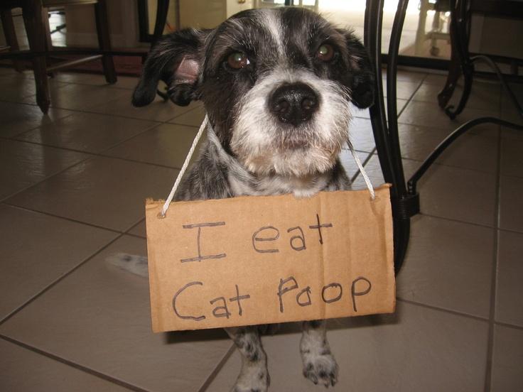 Dog Eats Cat Poop Worms