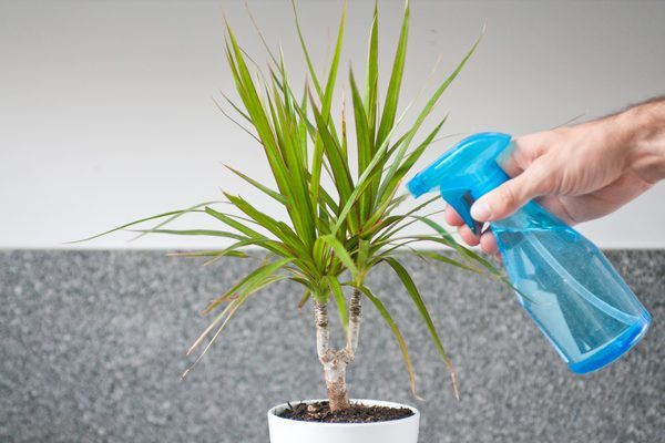 The houseplants are susceptible to many of the same pests that attack plants outside. Aphids, mealybugs, scale insects and mites are a few of these annoying bugs feeding off both outdoor and indoor ...