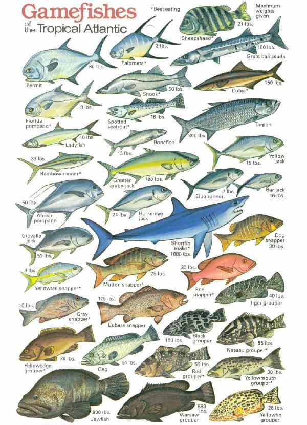1000 images about marine lives on pinterest dolphins for Saltwater fish representative species