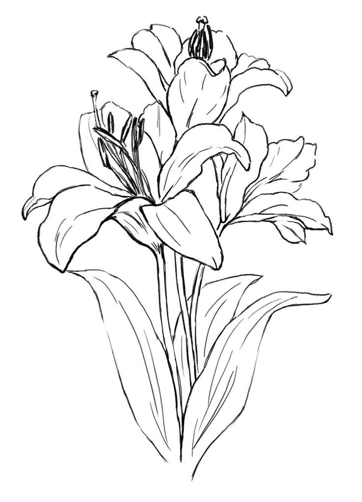 184 Best images about Flowers drawings
