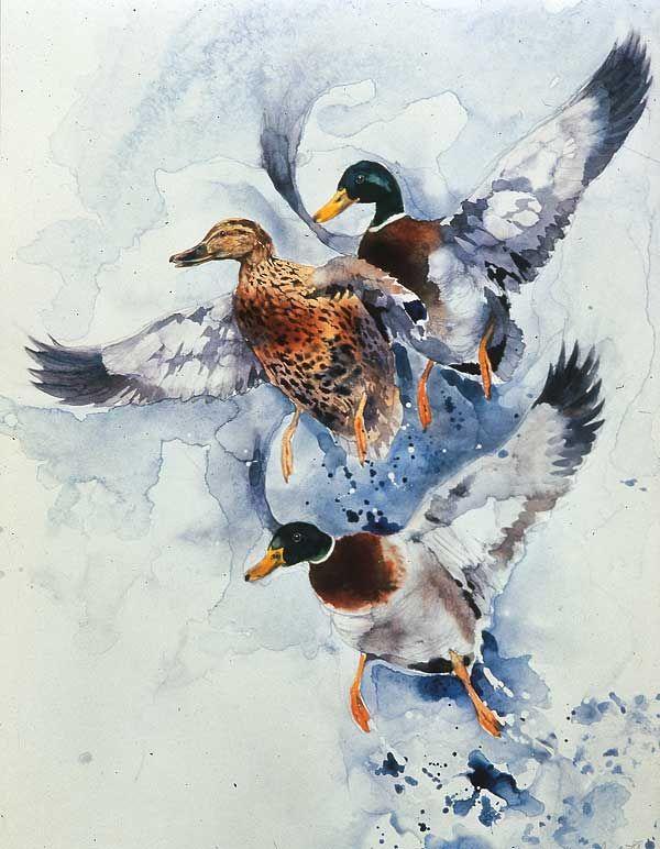 Auffliegende-Enten