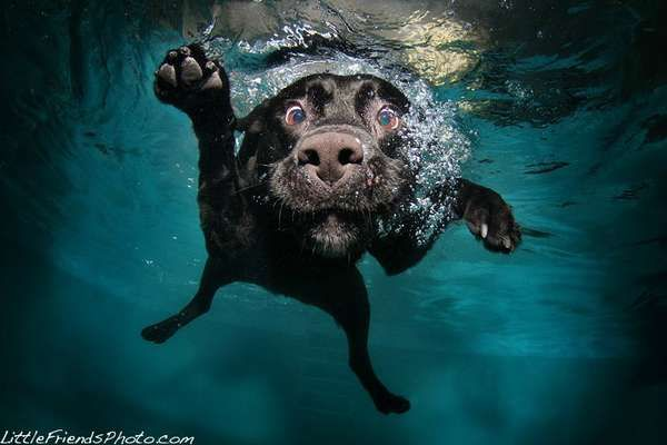 Underwater Dog Photography  Seth Casteel Captures Adorable and Frightening Pets Swimming #dogs #photography #pets