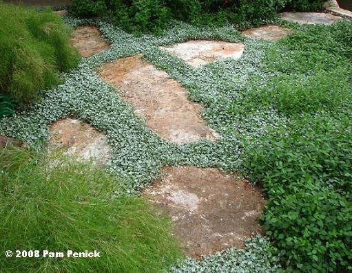 Landscape Stone Ground Cover : Best images about ground cover on pinterest trees and