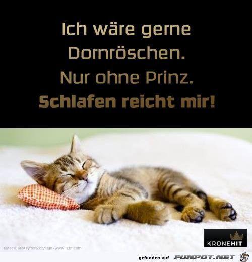 lustiges Bild 'Waere gerne Dornroeschen.jpg'- Eine von 22372 Dateien in der Kategorie 'witzige Bilder' auf FUNPOT.