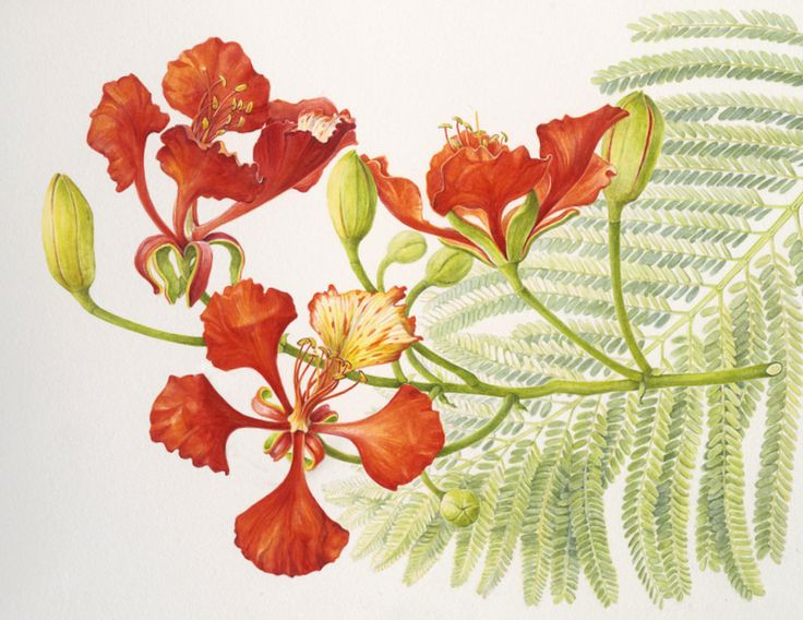 Botanical Sketches and Other Stories: June 2014