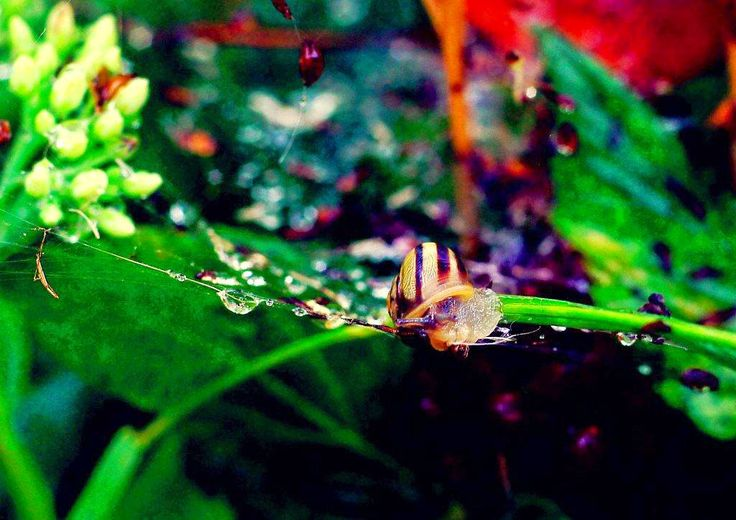 """Title: """"Dancing in the air"""". Small snail has almost danced int the air."""