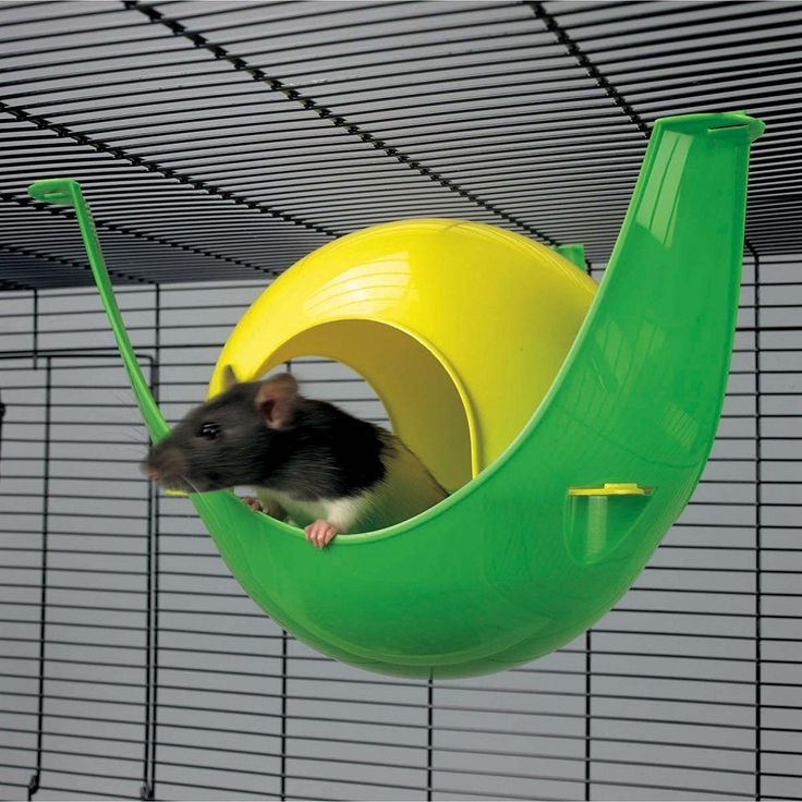 best 25  rat house ideas on pinterest
