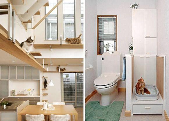 Bem Legaus!: Casa de gatos