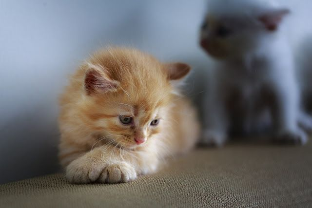 Belle Photo Kittens Cutest Cats And Kittens Cute Cats