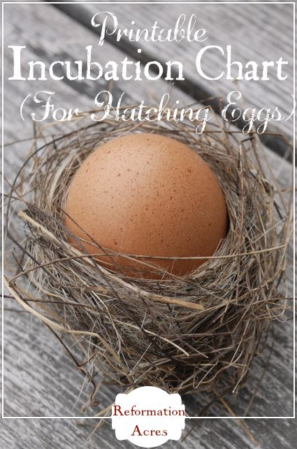 Printable Incubation Chart for Hatching Chicken, Duck, & Turkey Eggs