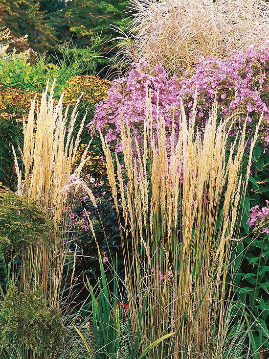 237 best gram neas ornamentales images on pinterest for Garden grass plants