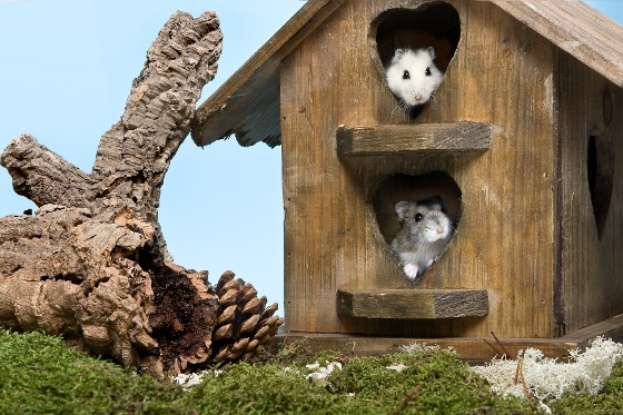 Domki dla gryzoni i królików:  http://www.kakadu.pl/Inne-akcesoria-dla-ma%C5%82ych-ssakow/domki-dla-gryzoni-i-krolikow.html