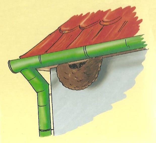 hnízdo vlaštoviček