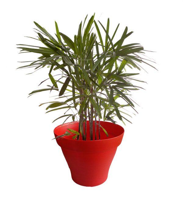 17 meilleures images propos de plantes d 39 int rieur avec for Interieur rouge