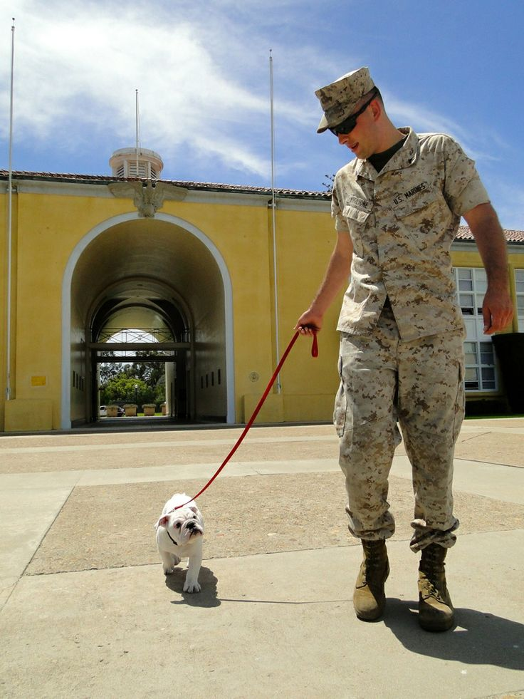Meet the Marines' newest mascot: Wiggly, wrinkly Pvt. Smedley Butler. Smedley Butler walks with his handler, Cpl. Tyler Viglione, at US Marine Corps Recruit Depot San Diego. The English bulldog puppy is in training to become official mascot for the depot, one of 3 official bulldog mascots in the Corps.