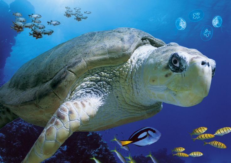 sea creatures pictures | Blackpool SEA LIFE Centre is one of the most popular marine life ...