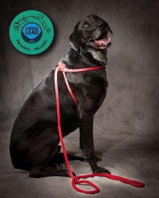 Vorschau: Harness Lead - Hundeleine Leinenzieher große Hunde