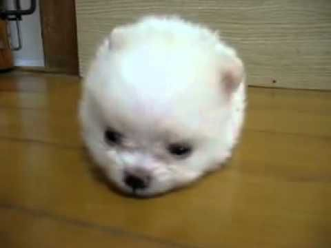 This is the cutest puppy in all of the world!!! I want