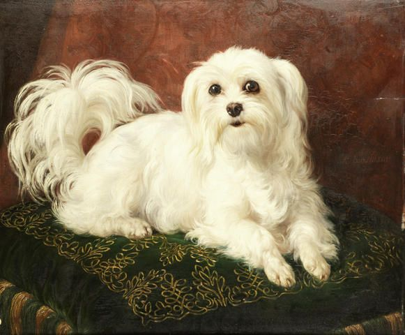 Odette, a Maltese on an embroidered cushion Jacques Raymond Brascassat (1804 - 1867), Frennch
