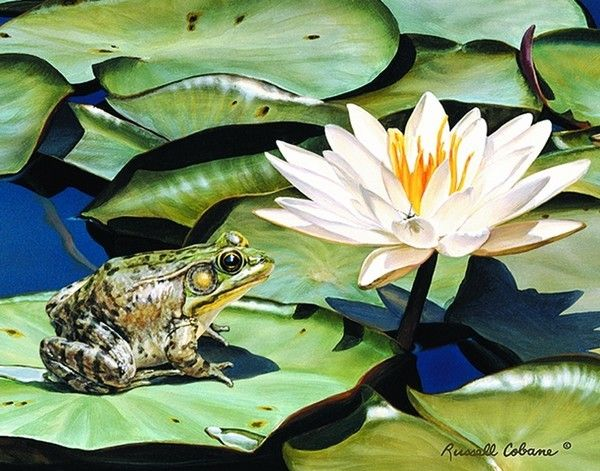 AMOUNG THE WATERLILIES  - Frog  RUSSELL COBANE