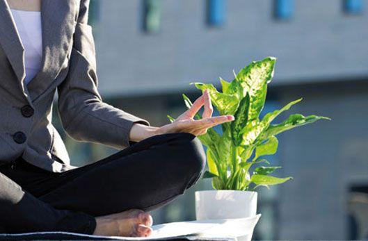 Les plantes vertes dopent la productivité