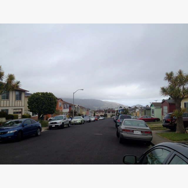 1000 Images About Daly City On Pinterest Yucca Tree