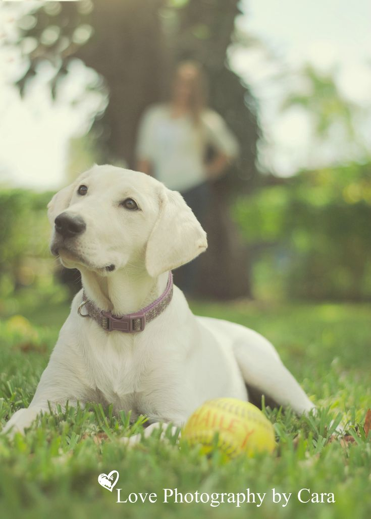 Cute Pet idea! Senior Portrait with Hailey and her softball and pup!