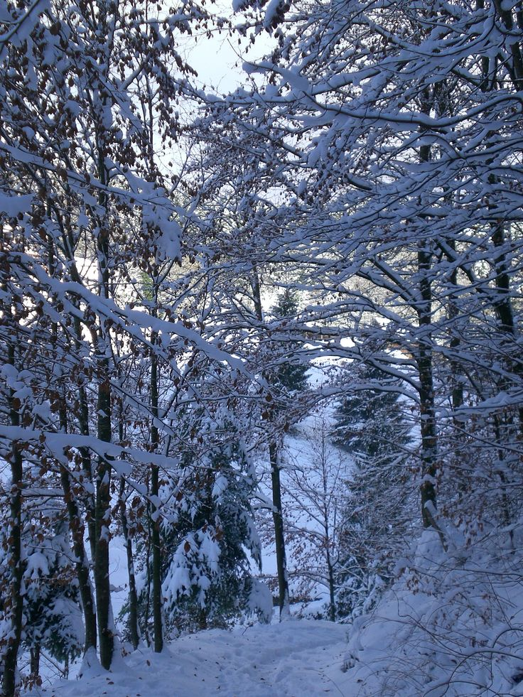 Let it snow ....  Bad Antogast, Black Forest in Germany