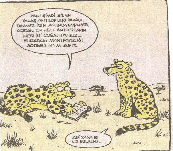 Humor - Mizah