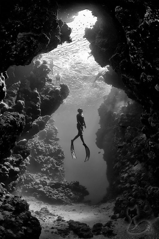 Freediving in ras mohammed national park near sharm el sheikh photograph by jacques de vos black and white photograph