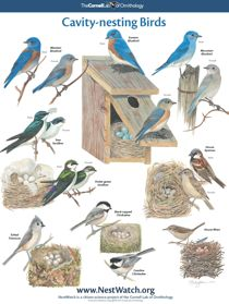 FREE Full Color Identifying Birds Poster!
