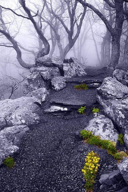 Into the Mystic, Appalachian Trail, Virginia