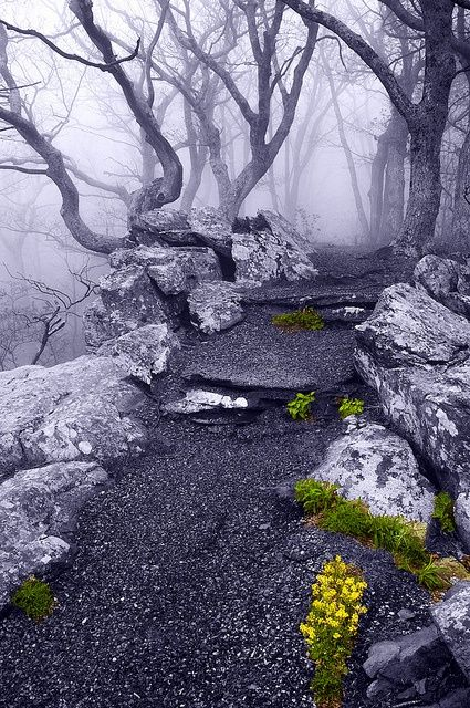 Into the Mystic, Appalachian Trail, Virginia  photo via elysium