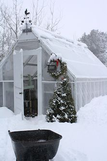 Year-round Uses for A Cold Climate Greenhouse #gardening #winter