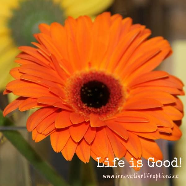 """LIFE is good in ICOF on Twitter: """"#LifeIsGood In The Company of Friends, #Manitoba's Individualized funding option for people with #disabilities http://t.co/o3N4RnlwiU"""""""