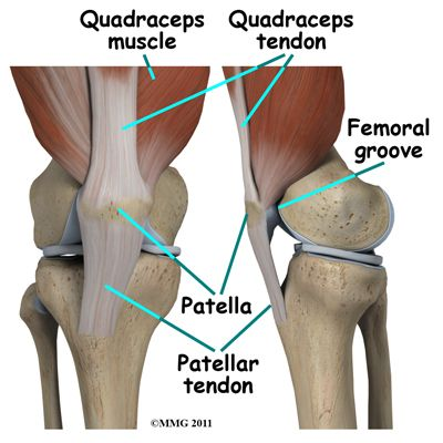 PT Exercises for Knee Surgery | Knee Arthroscopy | eorthopod.com