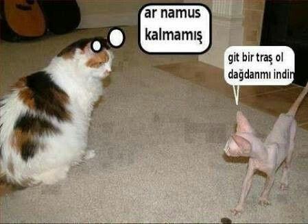 Kedilerden komiklik