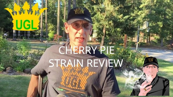 Cherry Pie Strain Review