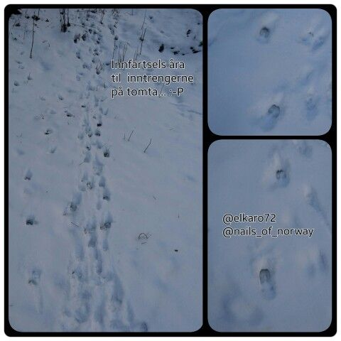 Dear walking across our yard. :-)