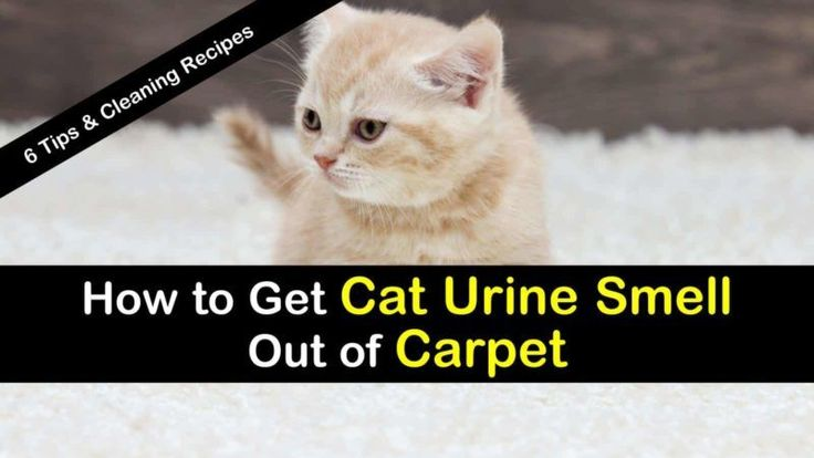 how to get smell out of carpet with baking soda