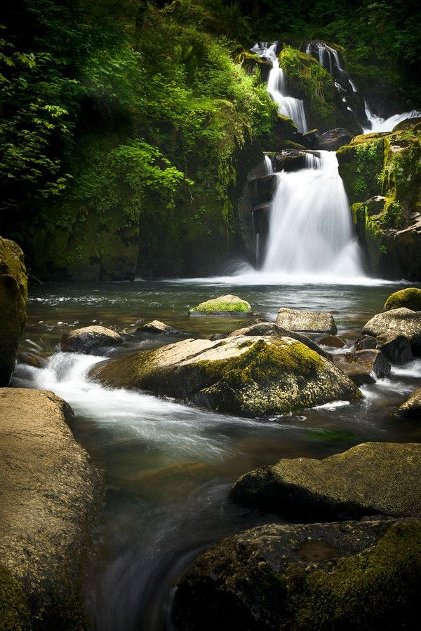 Sweet Creek Falls - A torrent of water rushes over a cliff ledge and downstream, framed by the verdant greenery of the Oregon forest. Nature photography by Nat Coalson. To see more please visit www.NatCoalson.com